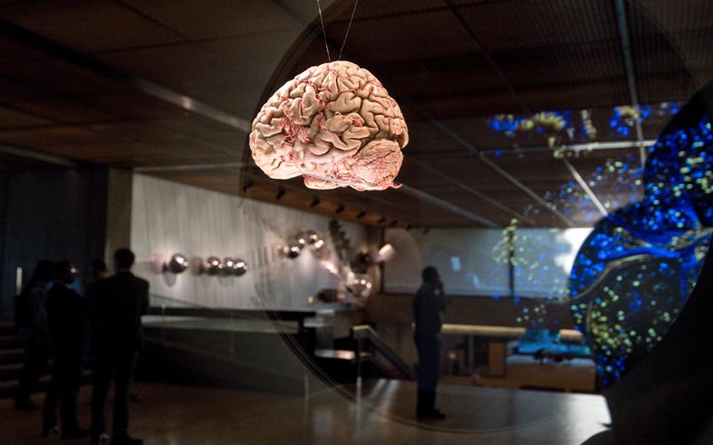 Cérebro – mais vasto que o céu © FCG, 2019. Fotografia: Márcia Lessa