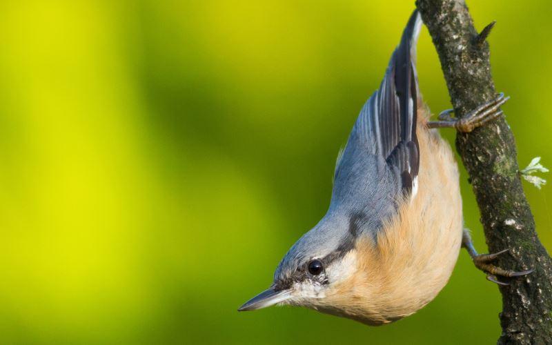 A bird, each month