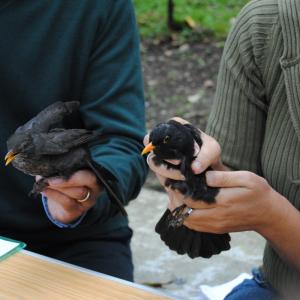 Um anel precioso — anilhagem científica de aves
