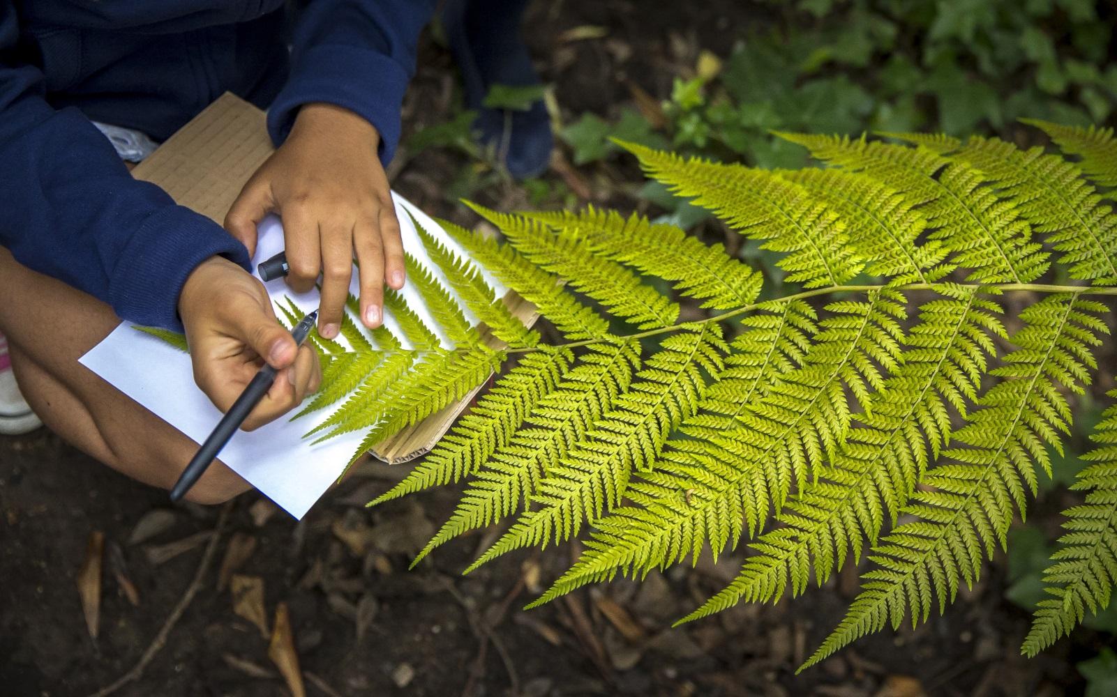Biodiversidade no Jardim: a fauna e a flora