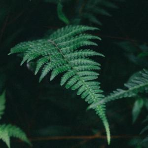 Florestas Silenciosas