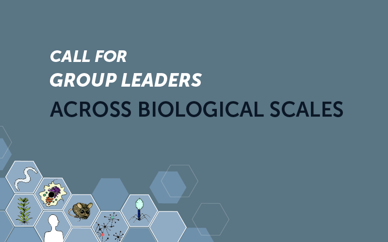 Position as Group Leader across Biological scales