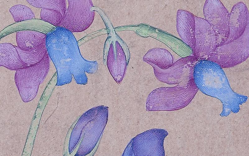 As Flores do Imperador. Do Bolbo ao Tapete