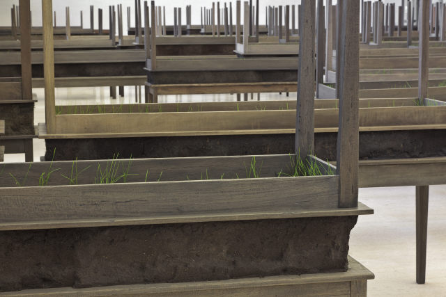 Doris Salcedo, 'Plegaria Muda', 2008. Wood, metal, mineral compound and grass. Modern Collection